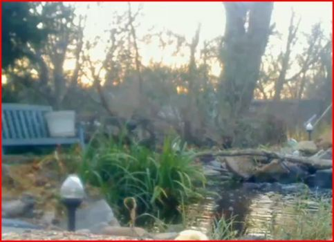 sunrise at the feeders