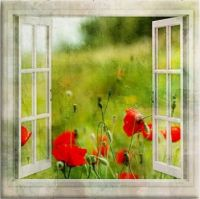 Red poppies window view