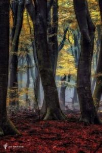 Autumn, Speulder Forest in The Netherlands.  6099