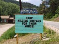 Stop killing buffaloes for their wings (Medium)
