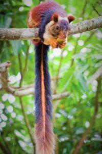 Rainbow squirrel.