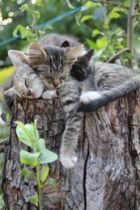 Nothing like a tree trunk to nap on...
