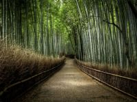 BAMBOO FOREST -JAPAN