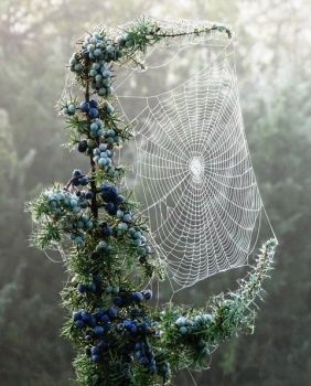 Pretty Spider Art!