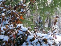 Kentucky-Winter-Dec-2013