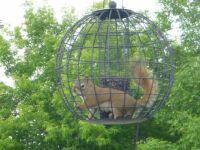 Squirrel Will Find A Way