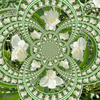 Narcis / Daffodil - kaleido