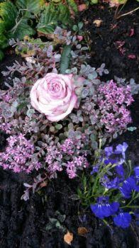 A beautiful arrangement!