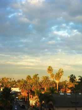 I love watching the Morning Sun kiss the Palm Trees in my neighborhood.