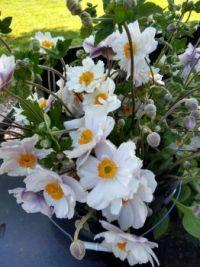 Flowers from Salt Air Farm August 2019