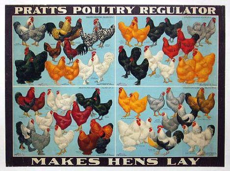 Pratts Poultry Regulator chart