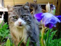 fiona in the irises june 6 2014