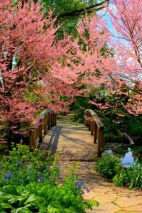 Bridge in springtime