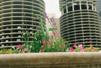 Flowers by the Chicago River