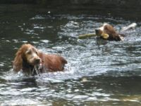 watery fun