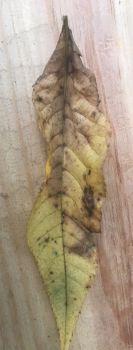 Leaf on hand rail
