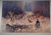 Trails End Sanctuary-Ruffed Grouse by Jim Kasper