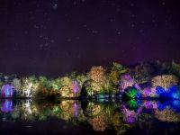 Trees lit at night in Mount Stewart Gardens, Northern Ireland