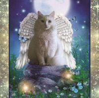white-angel-cat