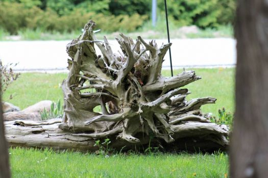 Drift Wood Garden