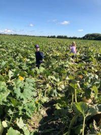 My grandchildren in the pumpkin patch - Montreal
