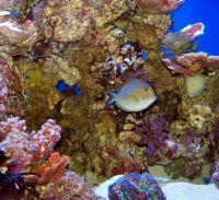 Birch Aquarium - Colorful Tank