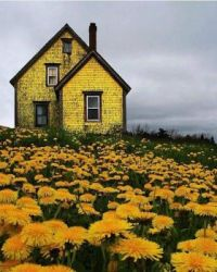 Abandoned Yellow House in Nova Scotia