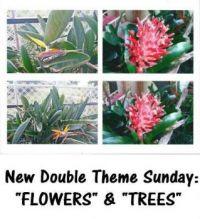 """New Double Theme Sunday:  """"FLOWERS"""" & """"TREES""""  Enjoy"""
