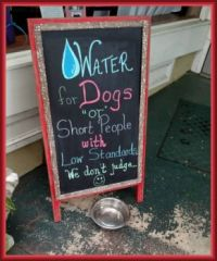 Give a Dog a drink