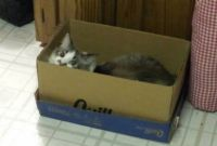 Skye in box 2014