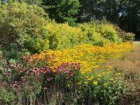 Flowers: Autumn colours