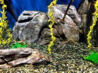 GA Aquarium 18