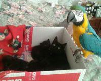 Igor a koťátka
