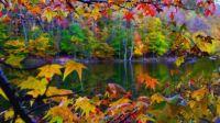 Beautiful_Fall_Leaves