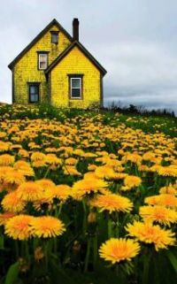 Old Yellow House...