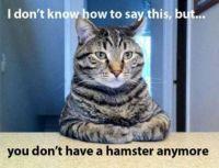 Honest Cat