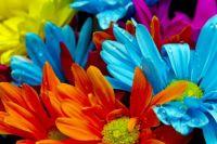 colorssssss!