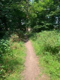 A Woodland Path