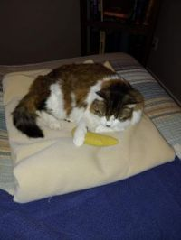 Lucy loves the Banana