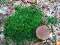 Najdeš houbu ?