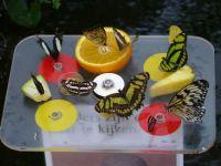 Vlindertuin Artis P1040204