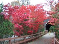 Covered Bridge with Red Tree