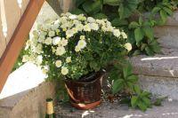 Another Flowerpot