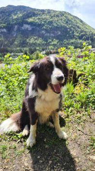 Chico in Kufstein