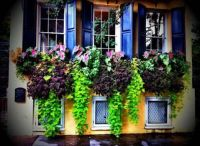 Gorgeous Window Box. Charleston.