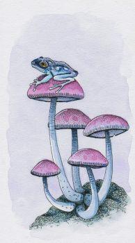 frog and mushrooms