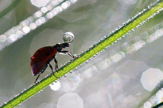 fortune teller lady bug