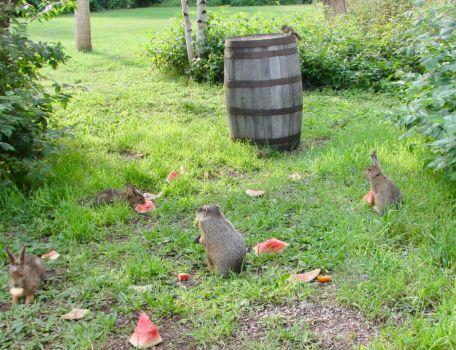 Our Animal Garden