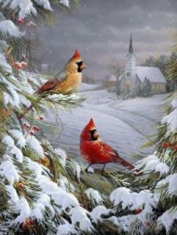 Birds on cold winters day