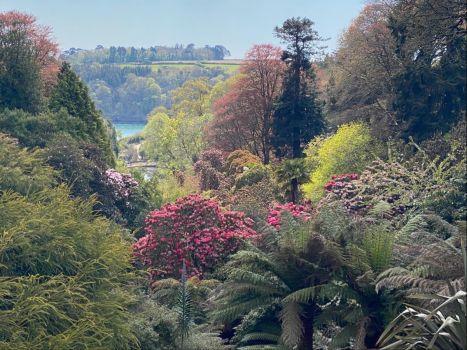 Trebah Gardens, Nr Falmouth, Cornwall